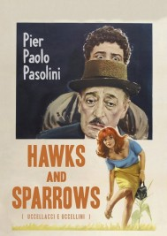 Hawks and Sparrows